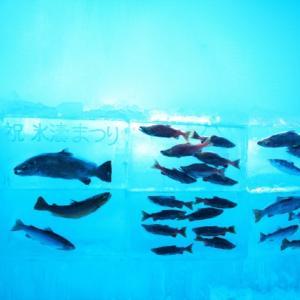 金魚の凍結防止、冬に水槽が凍らないようにする方法とは
