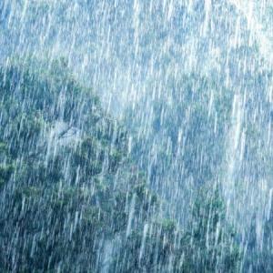 らんちゅうを屋外飼育する際には雨の注意点と対策について