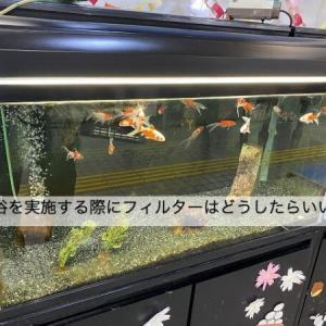 金魚の薬浴治療中、フィルター(濾過装置)はどうすればいい?