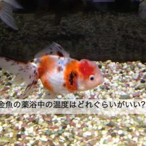 金魚の薬浴中の温度はどれぐらいにしたらいい?