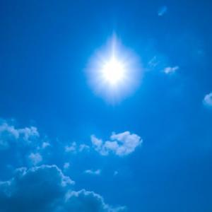メダカに長時間の直射日光は危険!死ぬ理由とは?