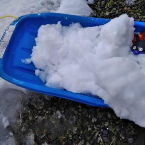 溶けかけの雪遊びの写真