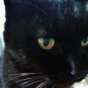 黒猫をアップで撮った写真【猫の写真】