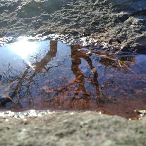 水面の空と太陽と木の写真