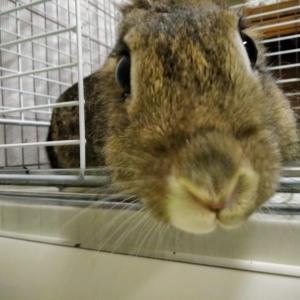 上から撮ったミニウサギの写真【うさぎの写真】