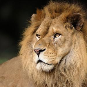ライオンズゲート占いキャンペーン