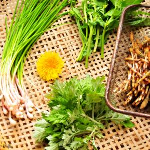田舎暮らし【食べられる草花】春の野草を採って食べる