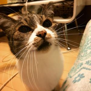 猫のオシッコの臭いを取る!!