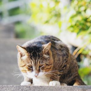 【ボス猫】インパクト強い野良猫発見した
