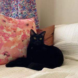 黒猫くるみ