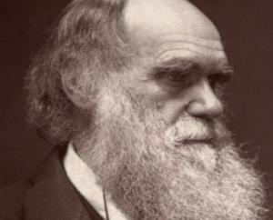 ダーウィンはそうはいっていません