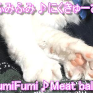可愛い猫スコティッシュフォールドエアーふみふみ肉球面白い動画
