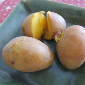 ジャガイモ「インカのひとみ」めざめ?