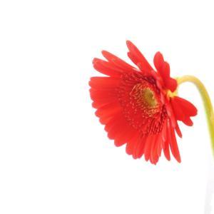 宿泊先に着くと、一輪の花が置いてありました。When I arrived at the accommodation, there...