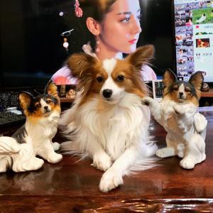 愛犬の歯磨きには加熱した鶏の骨が最適だ🐕グリニーズ等の歯磨き用品は歯磨き効果が曖昧なうえに高価だね🐶