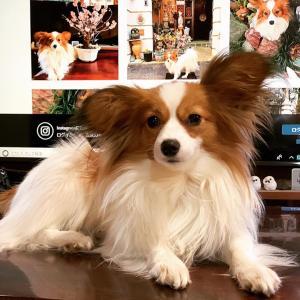 犬のしつけに暴力による体罰は許されるか❓昔流の躾は動物虐待の極み👹ケージやサークルはしつけにも有害💔