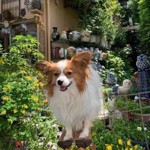 犬の正しい飼い方に関する川柳集 80句