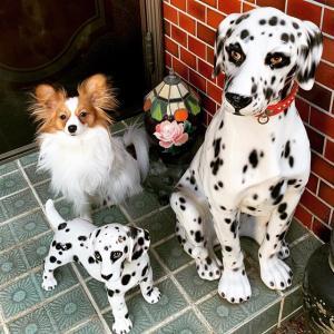 獣医師監修とは科学的な根拠の無いでっち上げの編集❗信用するとだまされる👺獣医は犬の天敵の白衣の詐欺師👹