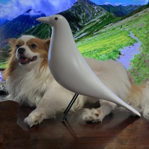犬の正しい飼い方の検索はMicrosoft Bingが効率的で最良🥰ブログ「愛犬問題」の随想がトップページに沢山出る🐕GoogleやYahooでは検索困難😢犬の天敵の悪徳業界の記事が氾濫👺
