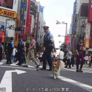 大型犬放し飼いの飼い主を逮捕🐕近隣住民とのトラブル多発で任意出頭6回求めた後に🐩逮捕は適法か❓善良な愛犬家は危惧🐶