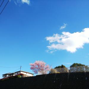 春に励まされる