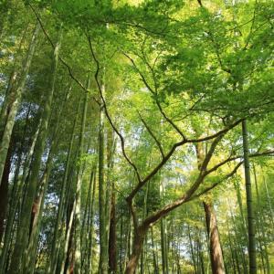 禅に関するオススメ本5冊 日常をスッキリ整える名書たち