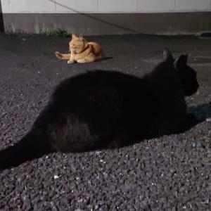 ランニングと猫