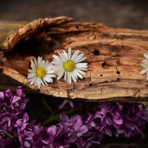 老い木に花咲くという言葉を知ってる?