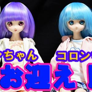 DDP リボンちゃん・コロンちゃん お迎えしました! 【VOLKS  Dollfie Dream Pretty】