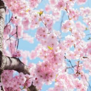 花見の季節に。ギフトにも使える春コーヒーおすすめ3選