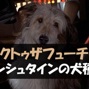 【バックトゥザフューチャー】アインシュタインの犬種は何?