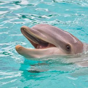 イルカとクジラは同じ?シャチ・サメとの違いや大きさは?
