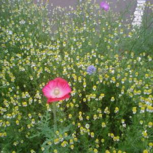 朝の植物公園