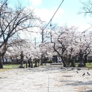 【仙台市若林区】お花見なら薬師堂で。近くに絶品パン屋や和菓子店