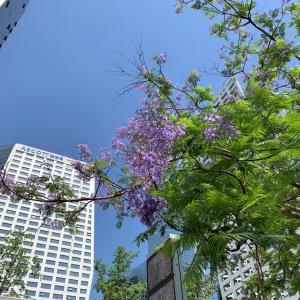 成都から花便り◡̈*.。鳳凰花といえば中国ではズバリ...?!