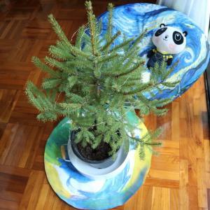 生木のクリスマスツリーを香港で購入してみました