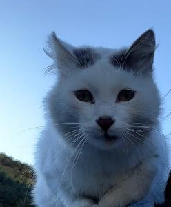 海外で撮影した猫の写真を貼るだけ