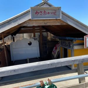 イカ焼きが絶品の菊谷商店でわさおに会ってきた