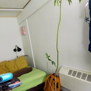 観葉植物が育つ様子