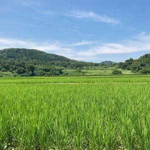 2021年田んぼの除草完了