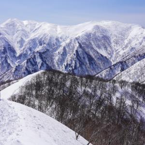 【残雪期限定の山】日白山から白銀の仙ノ倉山・平標山を望む