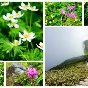 【花の百名山】平標山から仙ノ倉山、梅雨の合間に日帰り登山