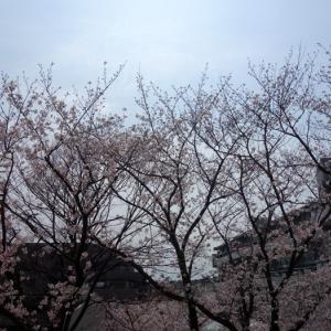 桜咲く★いつの間にか