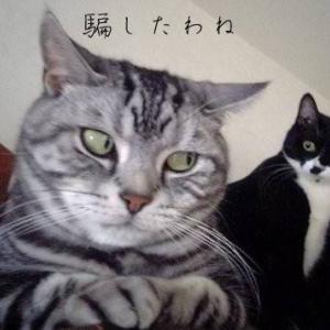 ジャケ買いシャンプー★失敗