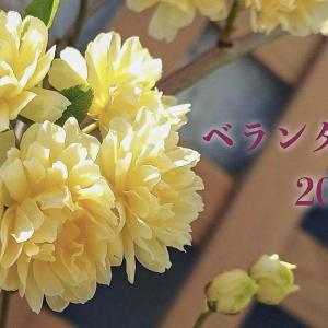 ベランダ園芸2021春