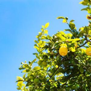 レモンのためいきっ