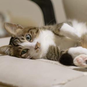 深夜の、ぼやき 。。  猫ちぐら