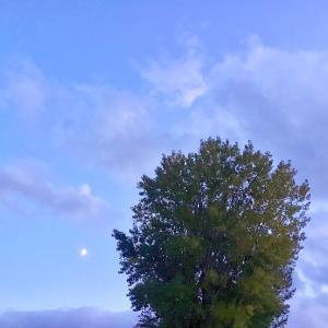 私の知らない空は、なんて、たくさん、あるのだろうっ!