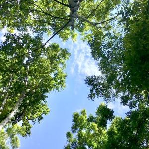 夏の日に、仰いだ青空っ♡ そして、秋になって、冬が来た 。。