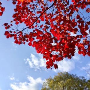 11月の4枚 【 秋から、冬へと… 移り変わる街 】